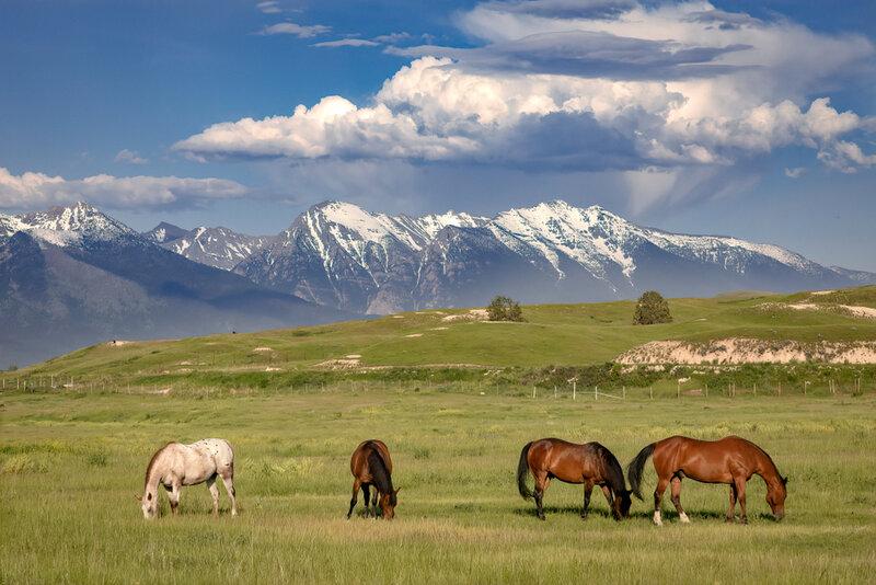 horses in pasture in montana